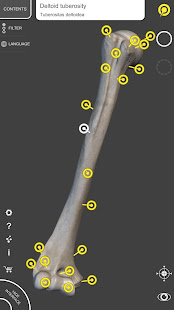 App Skeleton | 3D Anatomy APK for Windows Phone