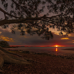 Sunset by Dom Del - Landscapes Sunsets & Sunrises ( clouds, water, tree, sunset, rocks, sun )