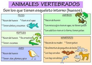 Photo: Vertebrados