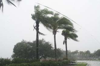 Photo: Palm Trees blowing everywhere during a windy gust of Tropical Storm Debby