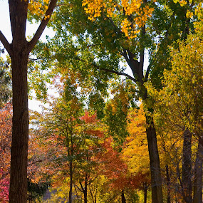 Strolling Through Fall by Susan Grefe - City,  Street & Park  Vistas