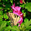 Butterfly 11 by Michelle Kelly - Novices Only Flowers & Plants (  )