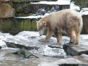 Photo: Knut ueberlegt sich einen Befreiungsplan ;-)