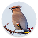 Happy Birding Journal icon