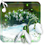 Snowdrops Flowers file APK for Gaming PC/PS3/PS4 Smart TV