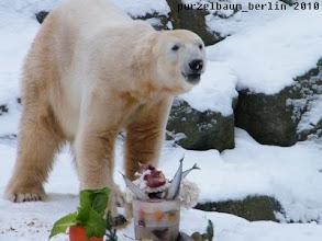 Photo: Schmatzend nimmt Knut die zahlreichen Besucher unter die Lupe ;-)
