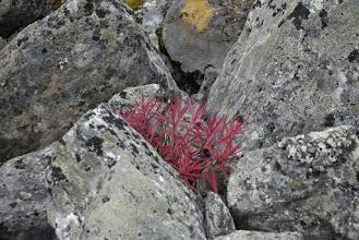 Kuva: Taas jotain mielenkiintoista kivien välissä
