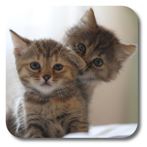 Q Cats Live Wallpaper Icon