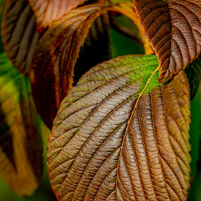 by Michael Lemm - Nature Up Close Leaves & Grasses