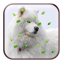 A8 Animal Magic Touch LWP icon