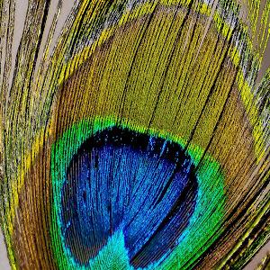 abstract-6758.jpg