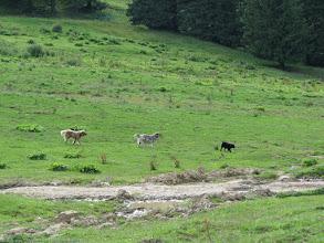 Photo: ... apoi a aparut avangarda din 3 caini, care m-au ignorat, dar nu stiam cum se vor comporta...