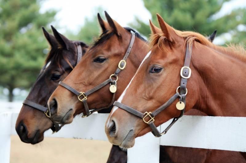 Paardenhouder beschermd door de Pachtwet?