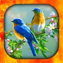 Birds Live Wallpapers HD & Backgrounds 4k/3D icon