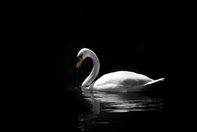 Sweet silence di Zafs_77