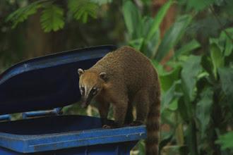 Photo: Tijuca National Park - http://www.brazadv.com/brazil-national-park/tijuca.htm - Rio de Janeiro - Brazil