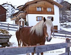 Photo: Stierva - im Winter