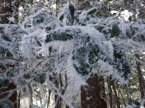 棘状に育った霧氷