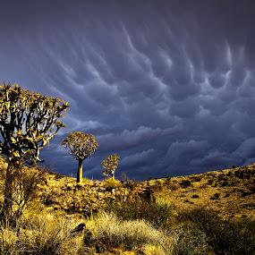 namaqwa by Theuns de Bruin - Landscapes Deserts ( n sa )