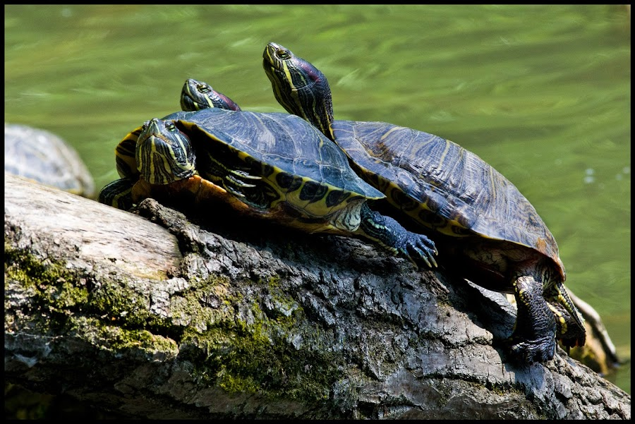 by Petar Tudja - Animals Reptiles (  )