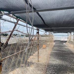 スープラ JZA70のカスタム事例画像 10Rii✩さんの2020年07月07日17:48の投稿