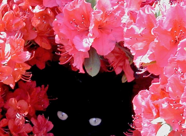 O..O..O..occhi di gatto di ombry