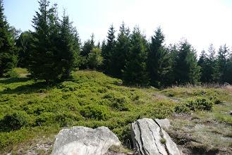 Photo: Vrchol Kovadlina (990 m) na hřebeni Rychlebských hor
