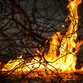 Fire by Rahul Manoj - Novices Only Objects & Still Life ( orange, yellow, black, branches, fire )