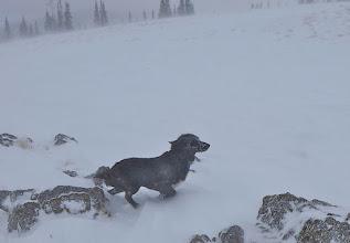 Photo: January 18 near Mac Pass - too windy