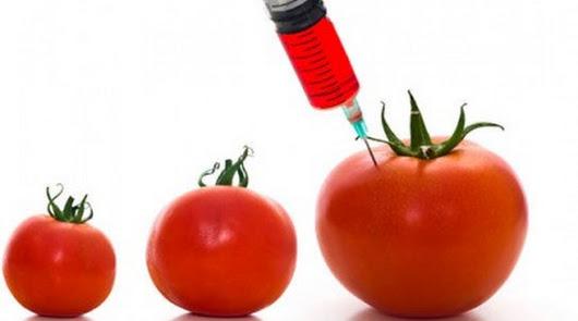 Alimentos transgénicos, ¿son seguros?, ¿cómo afectan a tu salud?