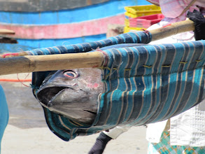 Photo: Year 2 Day 12 - Fish in a Sling (Vietnam)