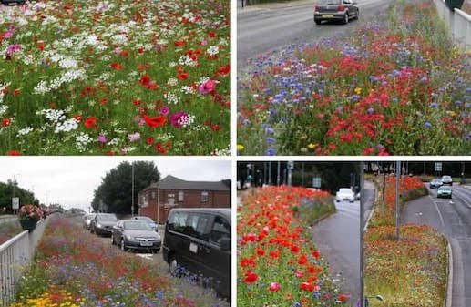 Town to adopt wildflower initiative