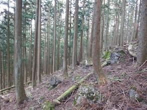植林帯を円原へ