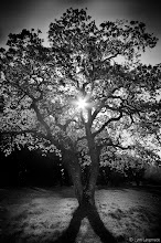 "Photo: numinous  ""Don't cry when the sun is gone, because the tears won't let you see the stars.""  ― Violeta Parra  #TreeTuesday +Shannon S. Myers and +Allan Cabrera"
