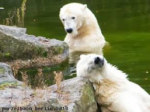 Photo: Tosca und Katjuscha beim Bade ;-)