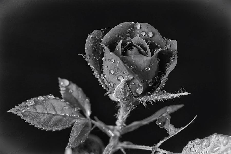 by Eseker RI - Black & White Flowers & Plants