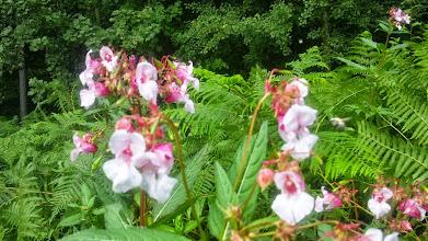 Photo: Warten auf nektarsaugende Insekten am Waldesrand. Rechts kommt etwas herangeflogen.