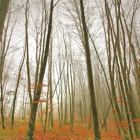 by Gregor Znidarsic - Landscapes Forests