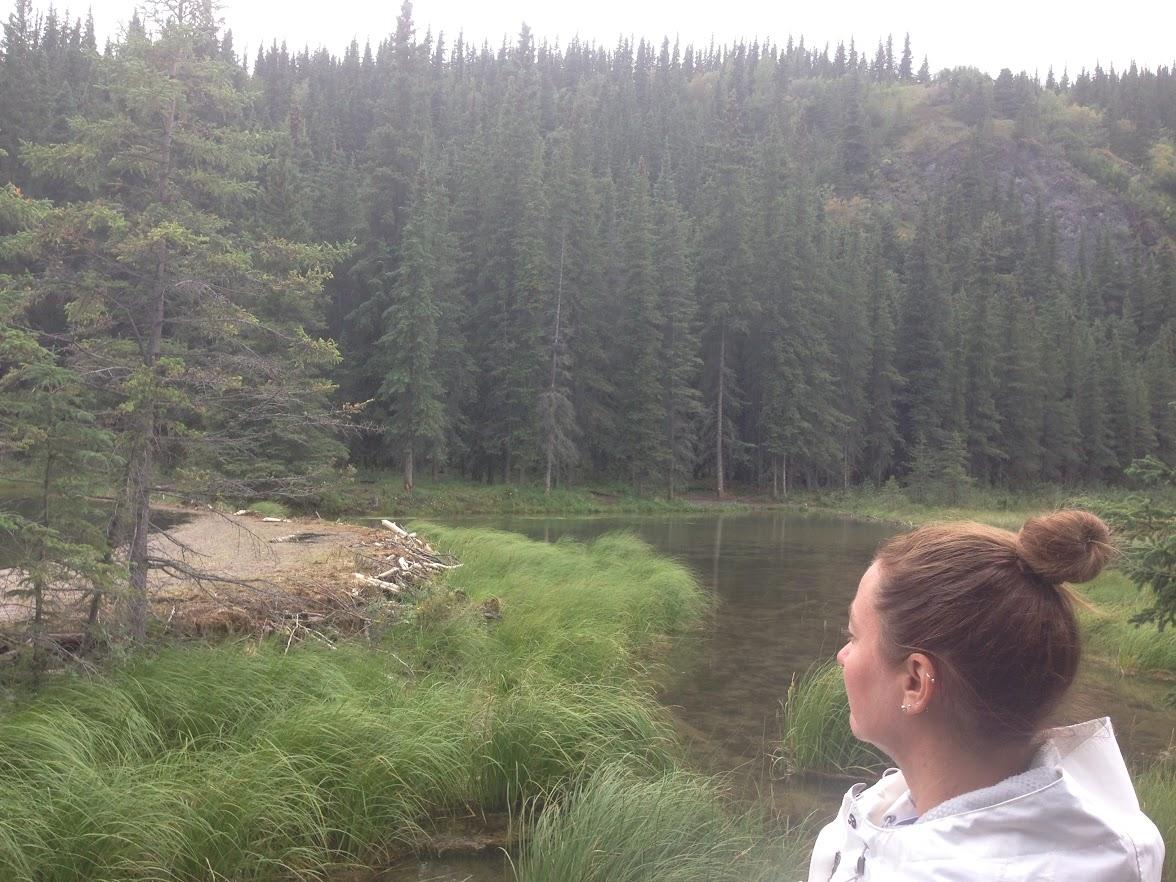Horseshoe Lake Trail. Beaver Dam