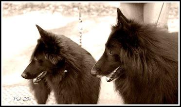 Photo: World Dog Show Paris 2011 - Avinashi with her father Charme Noir :)
