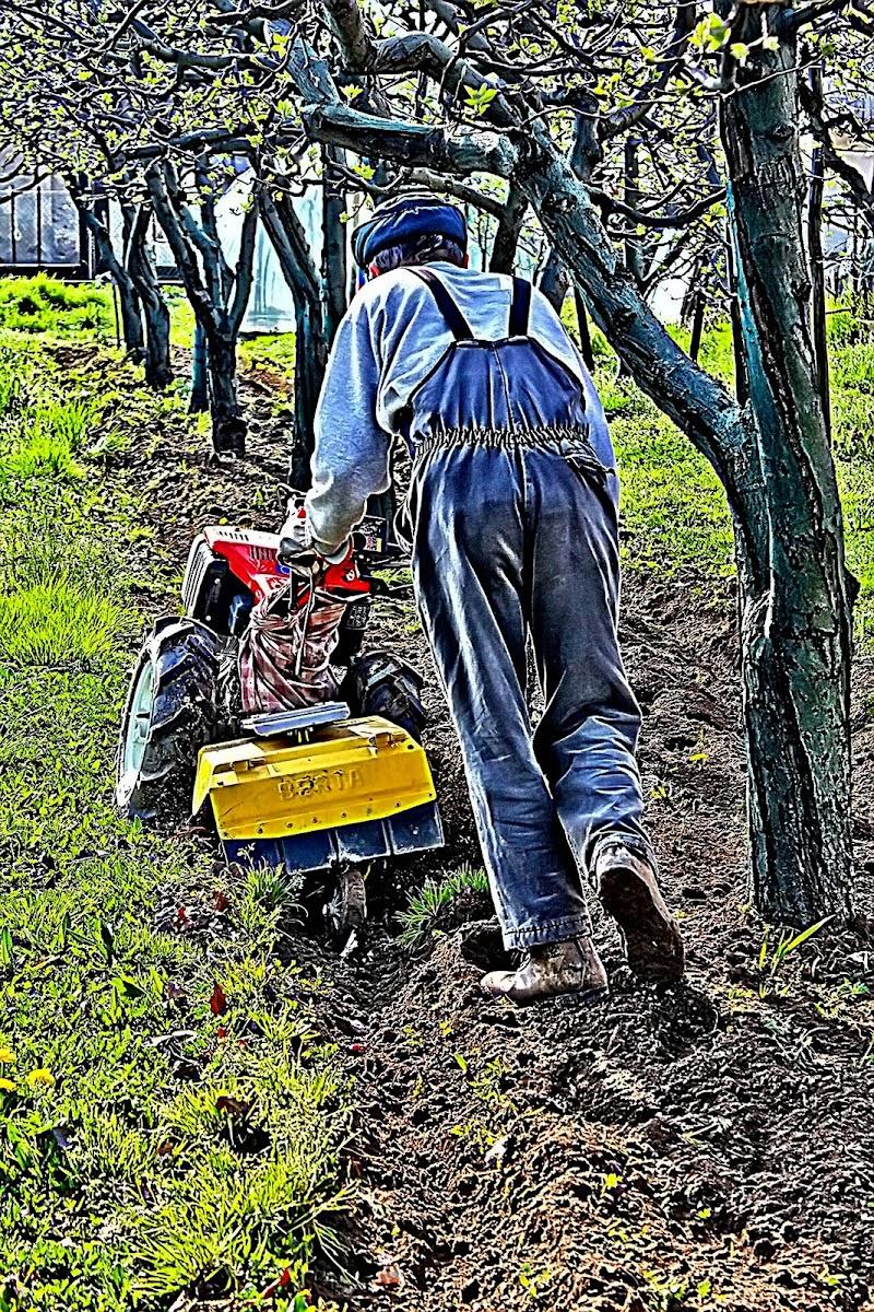 lavorare la terra  per avere frutti di Naldina Fornasari
