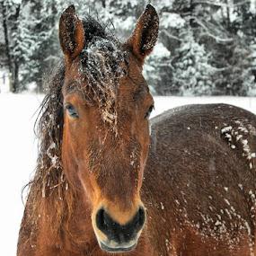 Lulu by Stacey Nagy - Animals Horses ( animals, horses, pets )