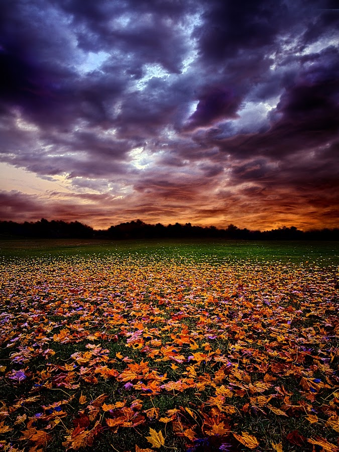 Left Behind by Phil Koch - Landscapes Prairies, Meadows & Fields ( summer. spring, vertical, photograph, environement, farmland, yellow, leaves, love, fall leaves on ground, nature, autumn, flowers, orange, twilight, agriculture, pwcautumn, horizon, myhorizonart, portrait, fall leaves, winter, national geographic, serene, floral, inspirational, wisconsin, natural light, colorful, phil koch, spring, photography, sun, farm, horizons, inspired, clouds, office, green, scenic, morning, field, red, color, seasons, blue, sunset, peace, fall, meadow, sunrise, earth, landscapes )