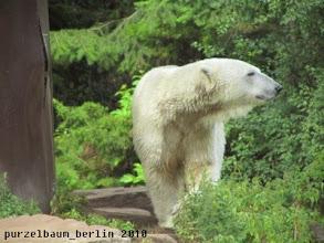 Photo: Knut wartet auf das Futter ;-)
