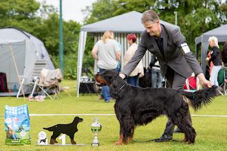 Photo: Fokkersklas reuen / Breedersclass dogs - Ego From the Moorland Friends