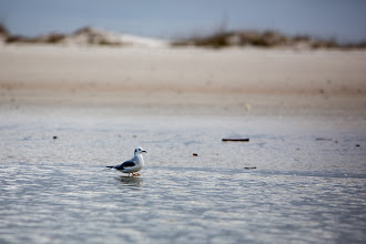Photo: the last lonely gull