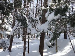 雪の樹林帯を進む
