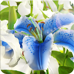 My Lily 3D live wallpaper Icon
