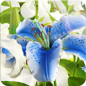 My Lily 3D live wallpaper