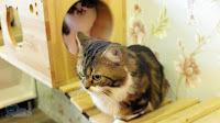 caturday養貓人家